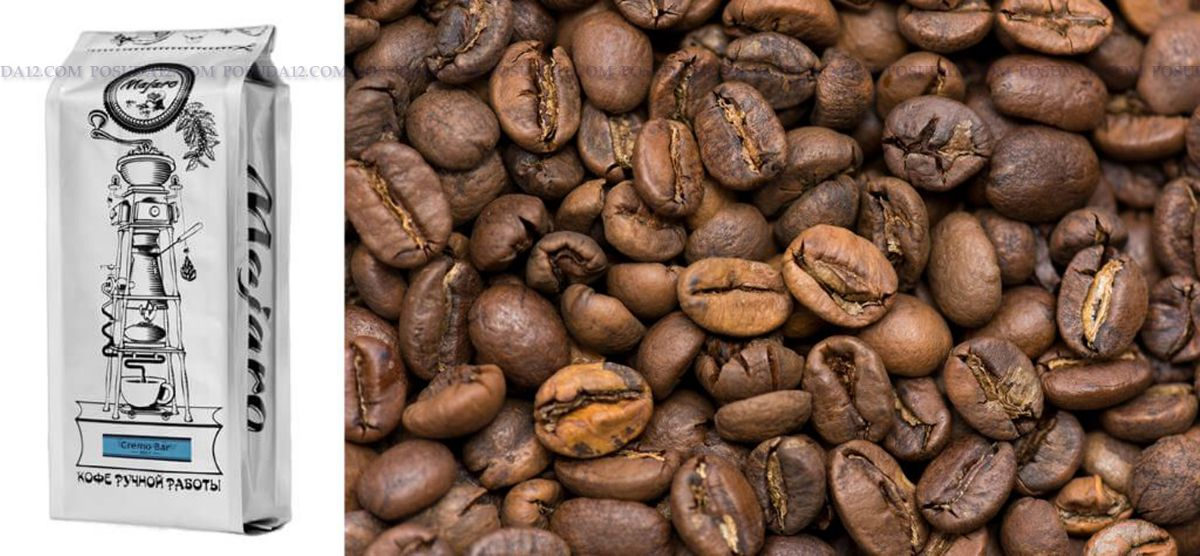 Coffea arabica seed oil noael