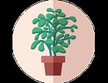 Купить счастливое денежное дерево (праздничный предзаказ)
