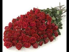 101 роза бордовая букет Новый Миг