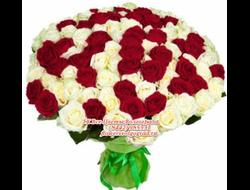 101 роза/151 роза/201 роза букетом цвет на выбор