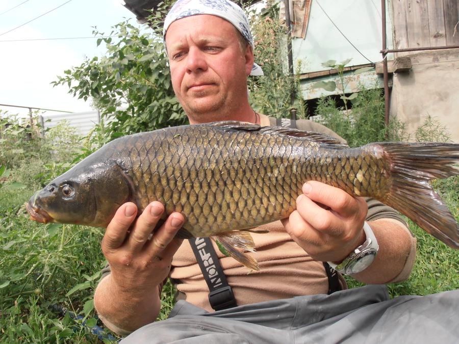 рыбхоз прогноз клева рыбы димитровград