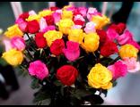 miks-iz-raznocvetnyh-roz-ehkvadora-ulan-udeh