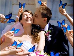 ИДЕЯ ПОДАРКА НА СВАДЬБУ: Живая бабочка + конверт для денег + бумажные бабочки (для фотосессии на улице)