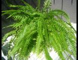 Комнатные и оранжерейные растения
