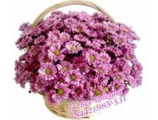 Корзина ромашковая хризантема