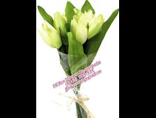 Букет из 9 Тюльпанов (цвет из наличия)