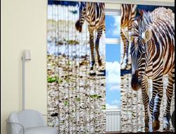Фотошторы 3д: Гуляющие зебры.