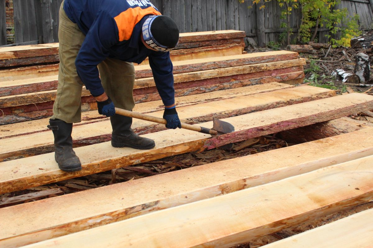 Siberian larch for Export