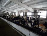 Продам фермерское хозяйство в Пензенской области. Коровник!