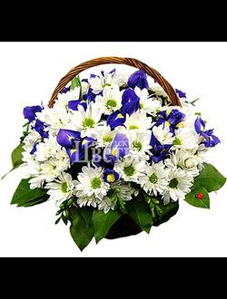 Корзина из хризантем с ирисами