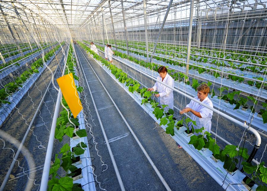 Бизнес план выращивание огурцы 9