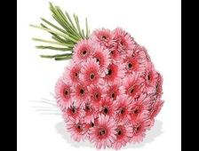 51 розовый гербер