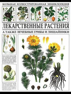 Большая иллюстрированная энциклопедия. Лекарственные растения. А также лечебные грибы и лишайники