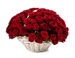 Корзина 75 красных роз