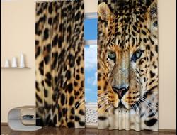 Фотошторы: Взгляд леопарда