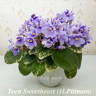 Teen Sweetheart (Тин Свитхарт) (H.Pittman)