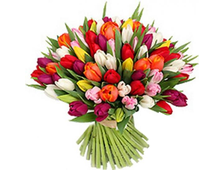 15 цветных Тюльпанов