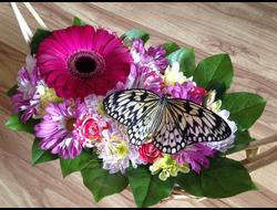Коробка (корзинка, ящик) с живыми цветами и бабочкой