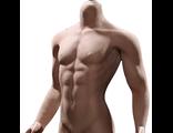 Супер-подвижное бесшовное мужское тело PL2016-M31  1/6 Super flexible Male Seamless Body - PHICEN