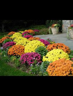 Многолетние цветы и травы