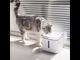 Поилка дозатор воды для животных Xiaomi PETKIT Smart Water Dispenser EVERSWEET 2S