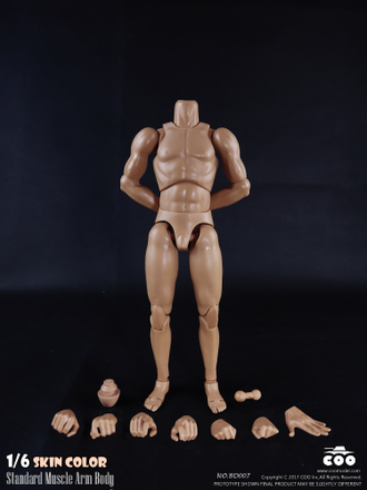 Тело мускулистое 1/6 - NEW:2.0  Body NO: BD007  (narrow shoulders) - COOMODEL