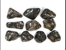 """""""Агат черепаховый"""", халцедон известняк-ракушечник, галтовка в ассортименте (25-35 мм, 8-11 г) №22886"""