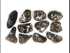 """""""Агат черепаховый"""", халцедон известняк-ракушечник, галтовка в ассортименте (20-30 мм, 4-5 г) №22884"""