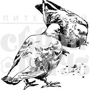 Штамп городские голуби клюющие крошки