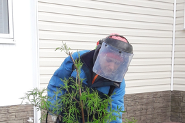Уходовые работы. Гарантийное обслуживание. Подготовка растений к зиме. Зимние работы.