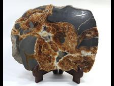 Аммонит, септария, окаменелость, срез полированный, Россия, Адыгея (198*152*52 мм, 1804 г) №17885
