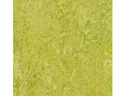 marmoleum  модульный colour t3224 chartreuse