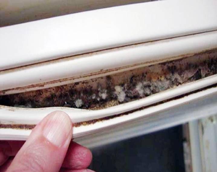 Фото плесени на уплотнителе холодильника