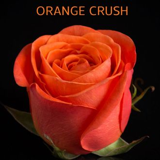 Оранж Краш (Orange Crush)