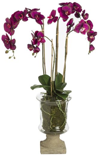 Цветок в горшке  SIA MARYLIN ORCHID GLASS POT MED. , 060251 ,
