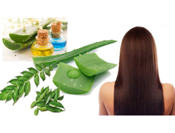 KACH HAIR ORGANIC SOLUTIONS