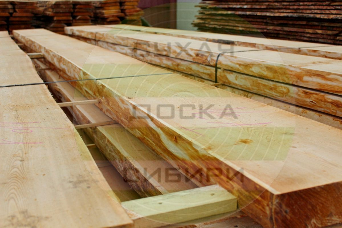 Siberian Larch from Krasnoyarsk