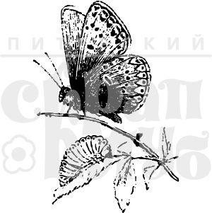 Штамп бабочка на травинке