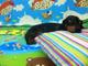 Детский коврик Mambobaby Лесной парк + Тигрёнок на празднике