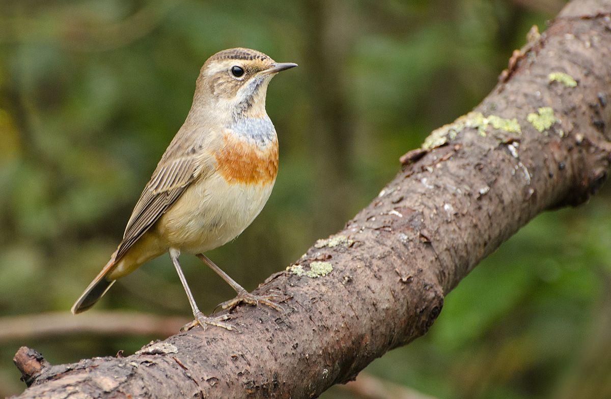 птицы курской области фото и название несложный