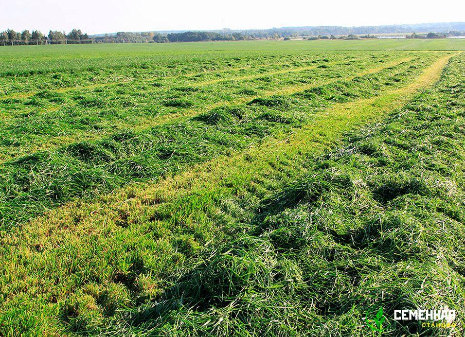 как рассчитать семена травы на сено