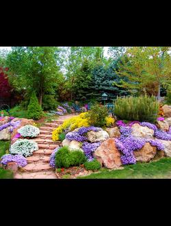 Растения для каменистых садов