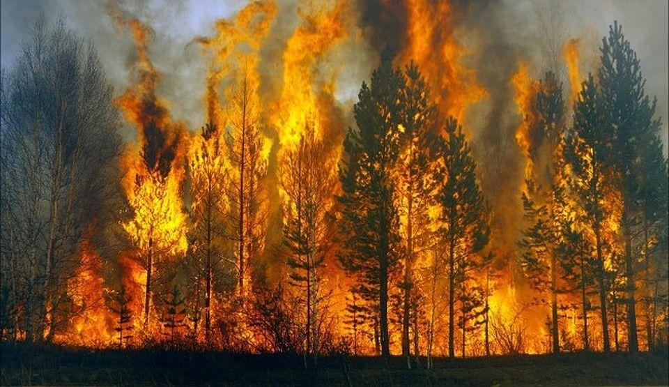 о лесных пожарах в якутии фото праздниками днями рождений