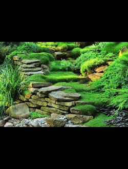 Озеленение. Посадка растений.
