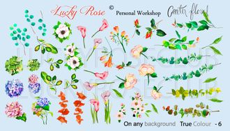 Lucky Rose True Color 6