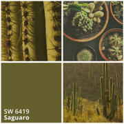 Sherwin-Williams: цвет месяца апрель 2017 - SW 6419 Saguaro