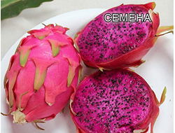 Питахайя пурпурная (Питайя) | Dragon fruit