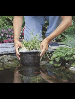 Посадка водных растений.