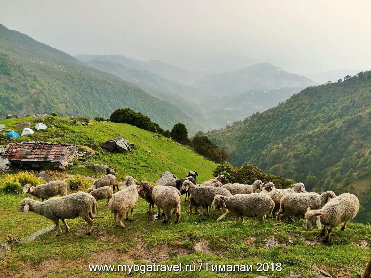 Дарамсала, Трек на плато Триунд, йога-тур в Индию, myogatravel.ru
