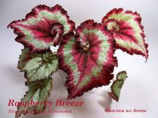 Raspberry Breeze фото